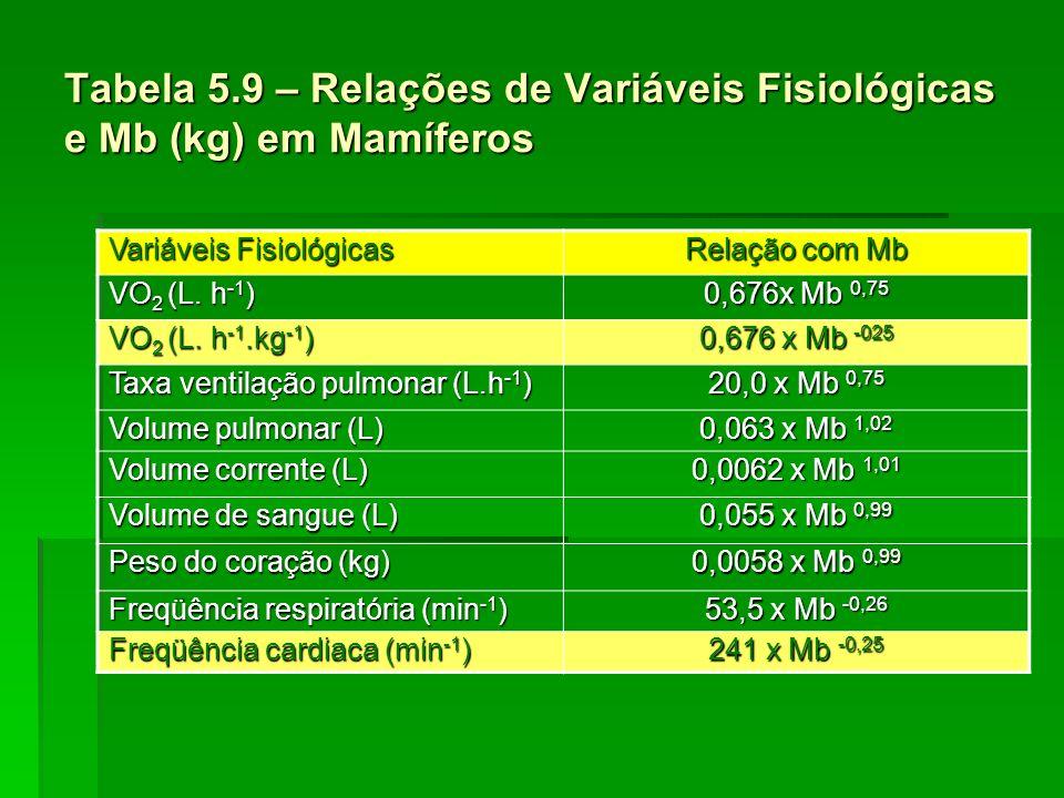 Tabela 5.9 – Relações de Variáveis Fisiológicas e Mb (kg) em Mamíferos Variáveis Fisiológicas Relação com Mb VO 2 (L. h -1 ) 0,676x Mb 0,75 VO 2 (L. h
