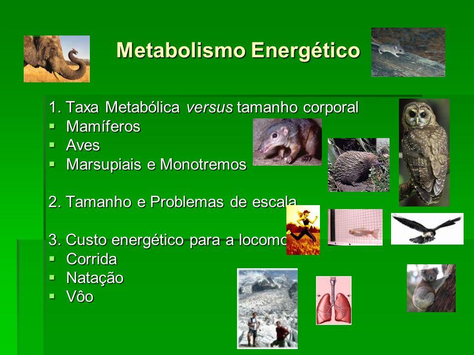 Metabolismo Energético Metabolismo Energético 1. Taxa Metabólica versus tamanho corporal Mamíferos Mamíferos Aves Aves Marsupiais e Monotremos Marsupi