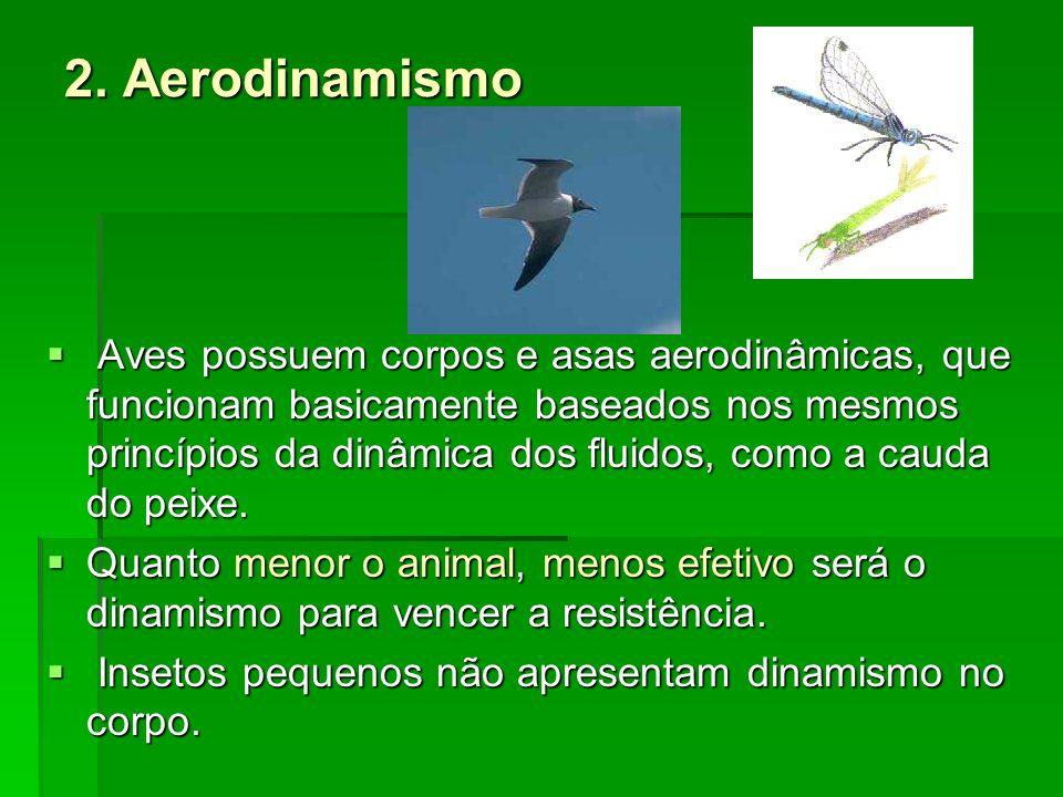 2. Aerodinamismo Aves possuem corpos e asas aerodinâmicas, que funcionam basicamente baseados nos mesmos princípios da dinâmica dos fluidos, como a ca