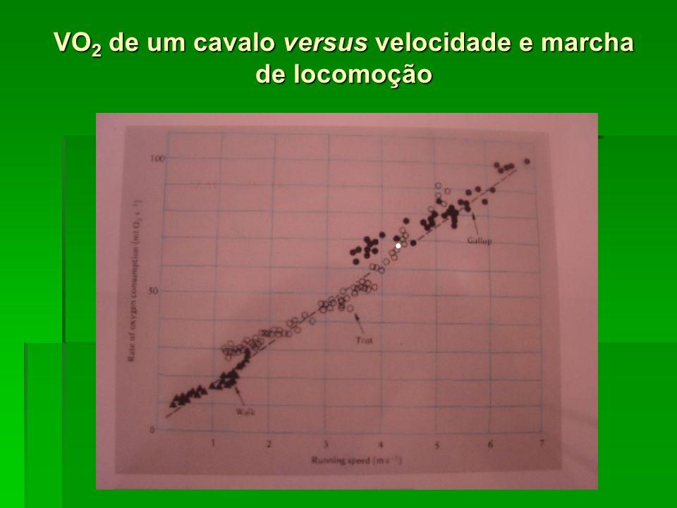 VO 2 de um cavalo versus velocidade e marcha de locomoção