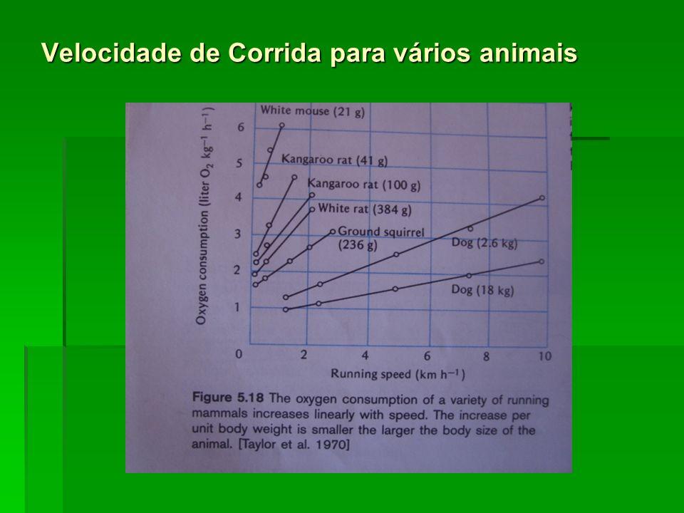 Velocidade de Corrida para vários animais