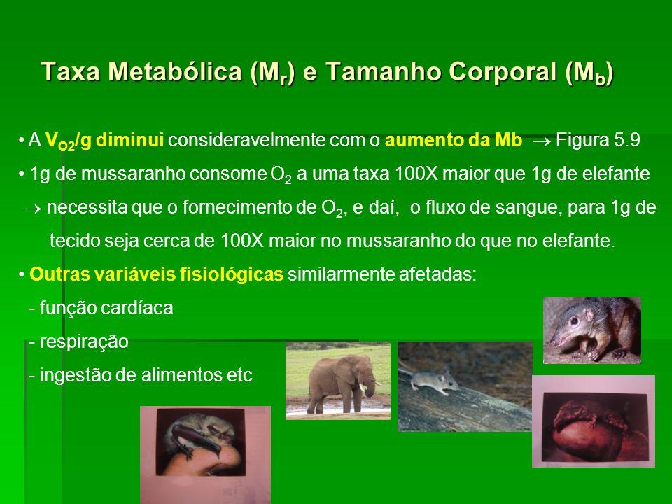 A V O2 /g diminui consideravelmente com o aumento da Mb Figura 5.9 1g de mussaranho consome O 2 a uma taxa 100X maior que 1g de elefante necessita que