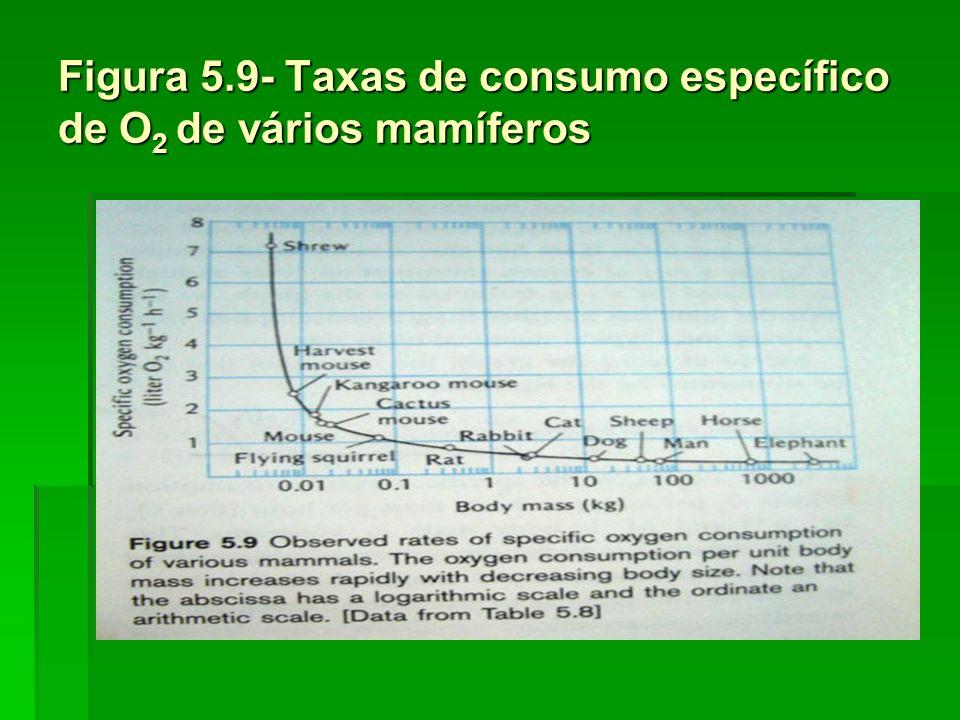 Figura 5.10 – Taxas de consumo específico de O 2 de vários mamíferos (coordenadas logarítmicas) V O2 /Mb = 0,676 x Mb -0,25 Na forma logarítmica log VO2/Mb = log 0,676 – 0,25 log Mb