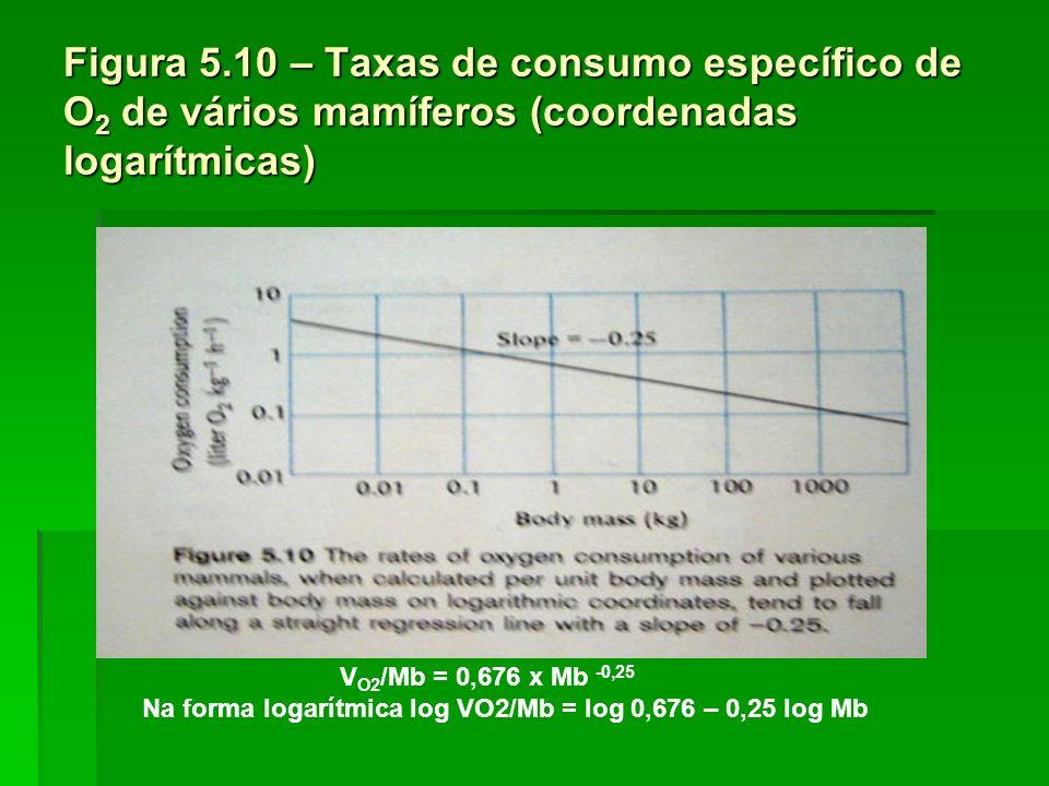 Figura 5.10 – Taxas de consumo específico de O 2 de vários mamíferos (coordenadas logarítmicas) V O2 /Mb = 0,676 x Mb -0,25 Na forma logarítmica log V