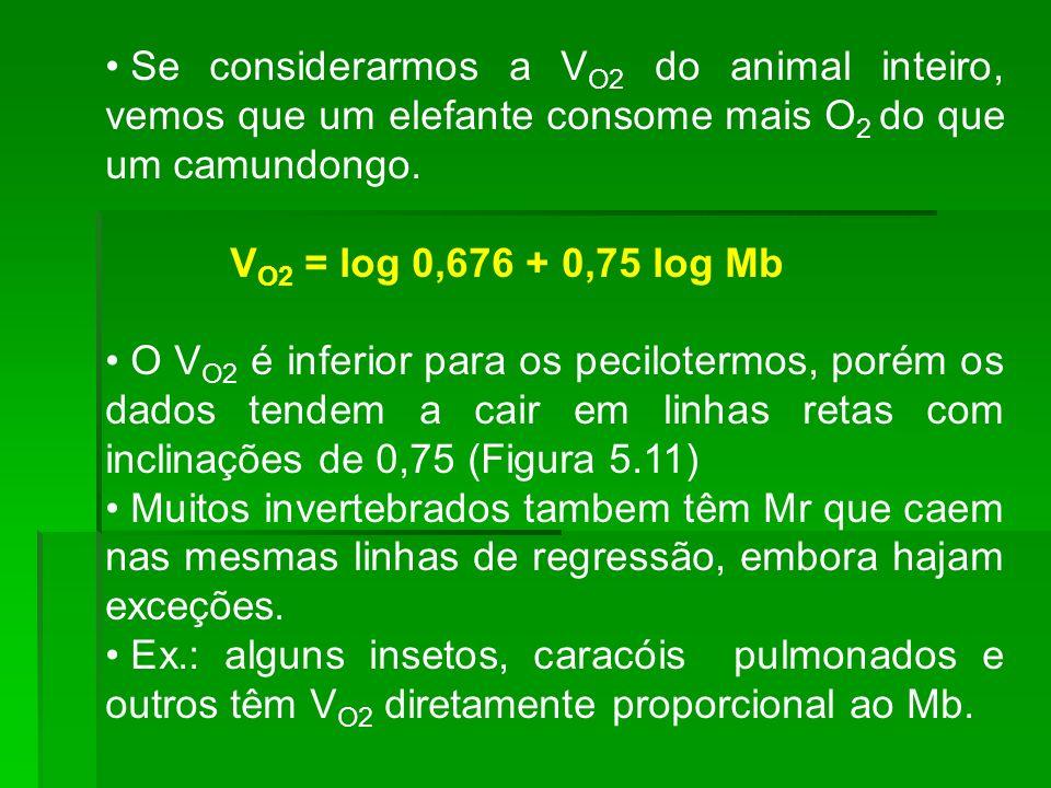 Se considerarmos a V O2 do animal inteiro, vemos que um elefante consome mais O 2 do que um camundongo. V O2 = log 0,676 + 0,75 log Mb O V O2 é inferi