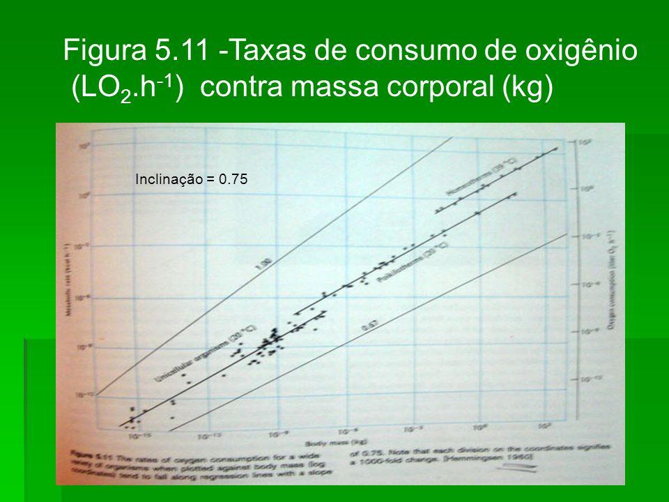 Figura 5.11 -Taxas de consumo de oxigênio (LO 2.h -1 ) contra massa corporal (kg) Inclinação = 0.75