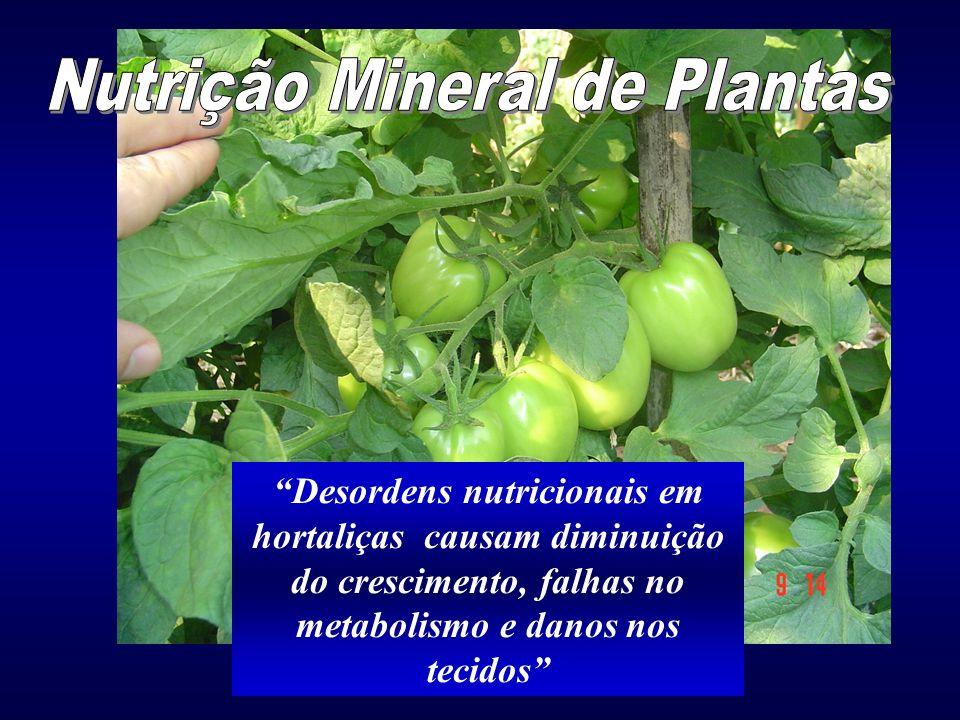 A importância da nutrição mineral As hortaliças apresentam alta sensibilidade à desequilíbrios nutricionais
