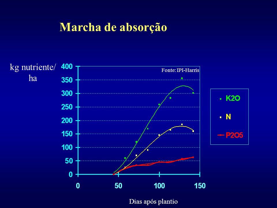 Um esquema representativo das funções dos nutrientes: