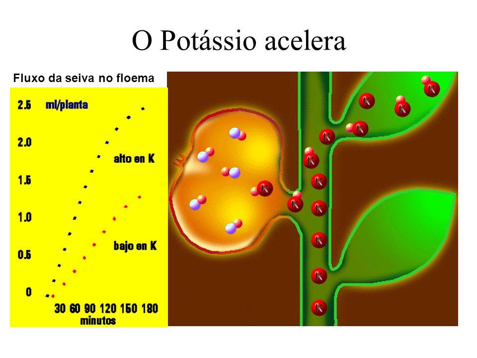 Período e método de adubação Absorção de Nutrientes Em geral, 3 períodos distintos de crescimento: I - Emergência - iniciação do desenvolvimento de tu