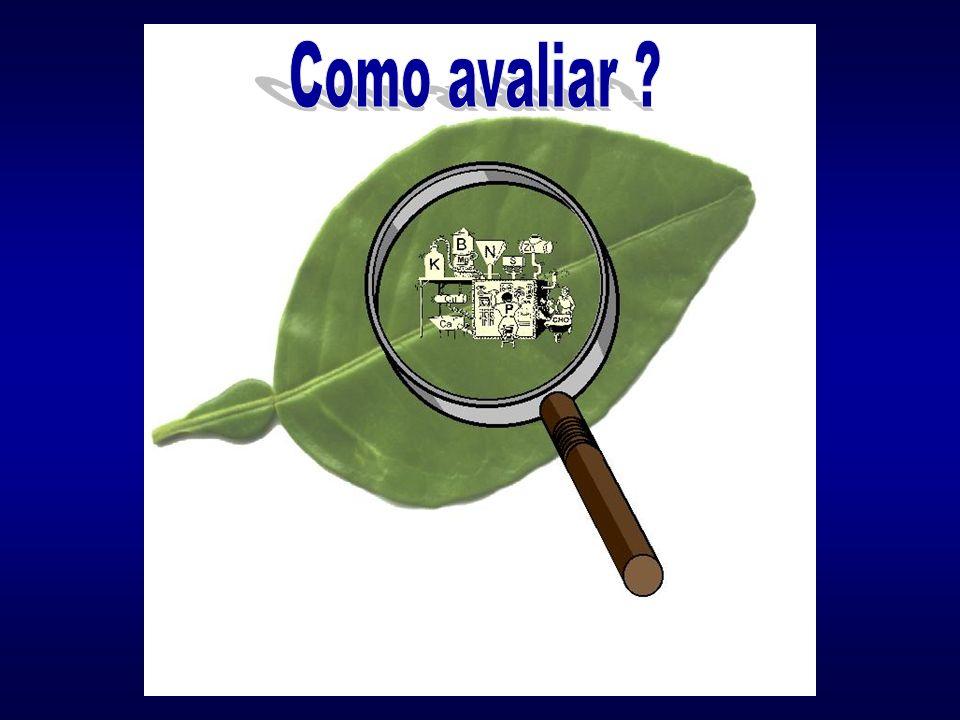 Análise de folhas: Monitoramento da nutrição; Busca de desequilíbrios; Avaliar programa de adubação; Diagnosticar fome oculta; Fator de decisão.