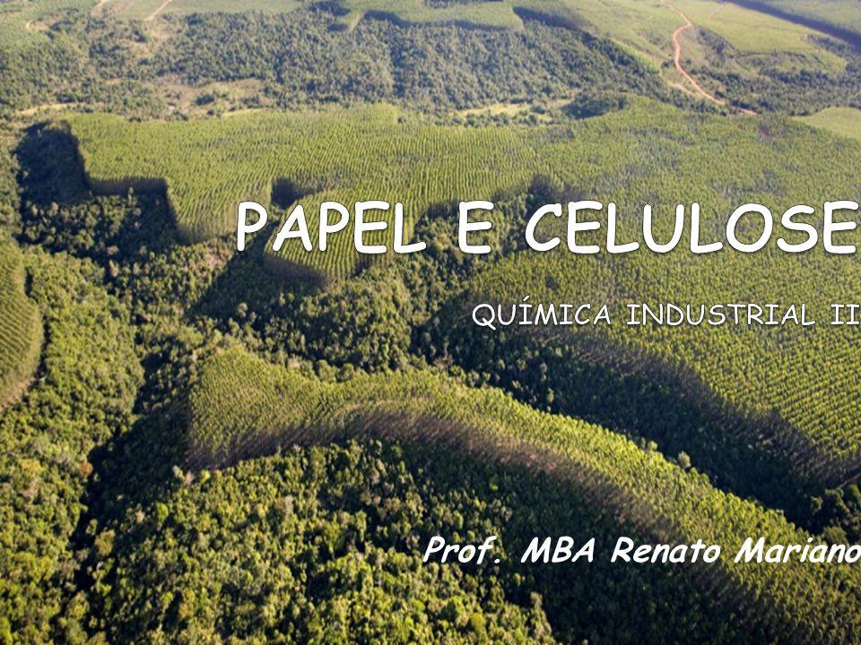 Colheita e Produção do Cavaco Como é iniciado o processo.