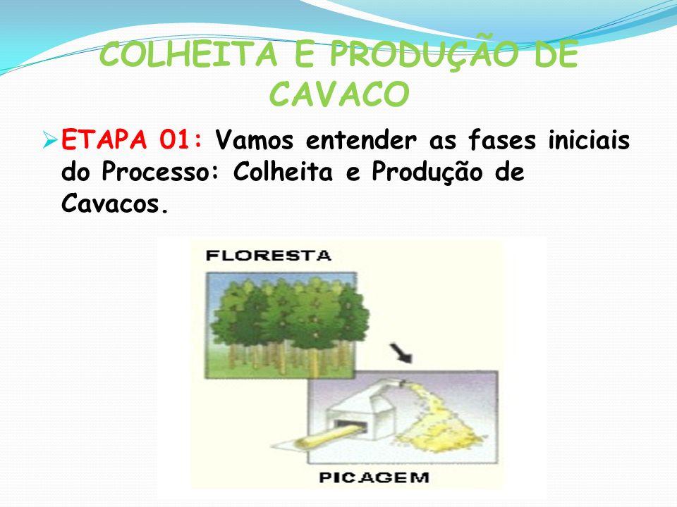 COLHEITA E PRODUÇÃO DE CAVACO ETAPA 01: Vamos entender as fases iniciais do Processo: Colheita e Produção de Cavacos.