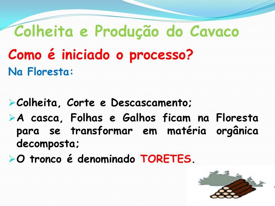Colheita e Produção do Cavaco Como é iniciado o processo? Na Floresta: Colheita, Corte e Descascamento; A casca, Folhas e Galhos ficam na Floresta par