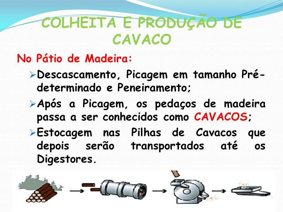 COLHEITA E PRODUÇÃO DE CAVACO No Pátio de Madeira: Descascamento, Picagem em tamanho Pré- determinado e Peneiramento; Após a Picagem, os pedaços de ma