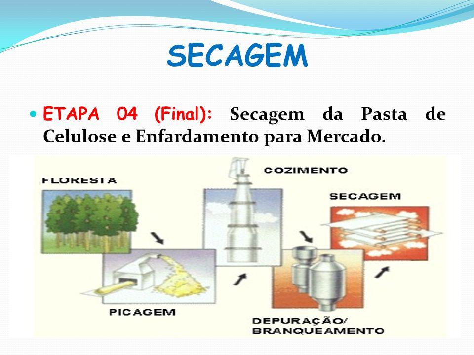 SECAGEM ETAPA 04 (Final): Secagem da Pasta de Celulose e Enfardamento para Mercado.