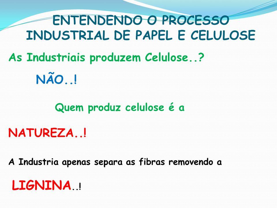 ENTENDENDO O PROCESSO INDUSTRIAL DE PAPEL E CELULOSE As Industriais produzem Celulose..? NÃO..! Quem produz celulose é a NATUREZA..! A Industria apena