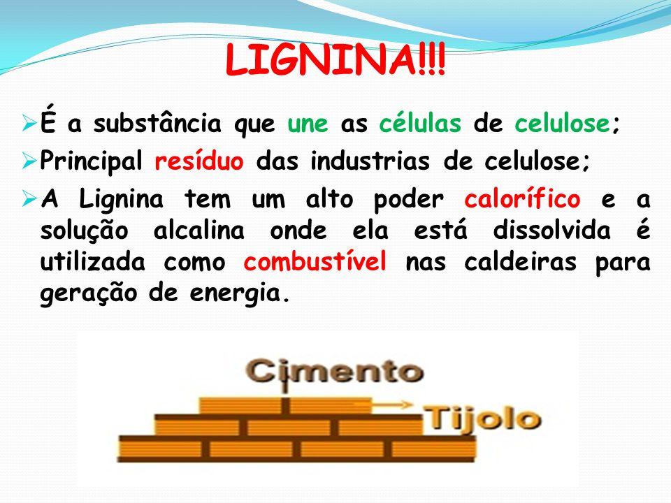 LIGNINA!!! É a substância que une as células de celulose; Principal resíduo das industrias de celulose; A Lignina tem um alto poder calorífico e a sol