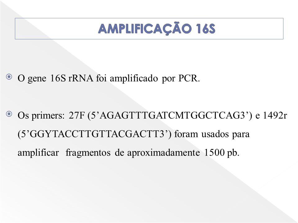 O gene 16S rRNA foi amplificado por PCR. Os primers: 27F (5AGAGTTTGATCMTGGCTCAG3) e 1492r (5GGYTACCTTGTTACGACTT3) foram usados para amplificar fragmen