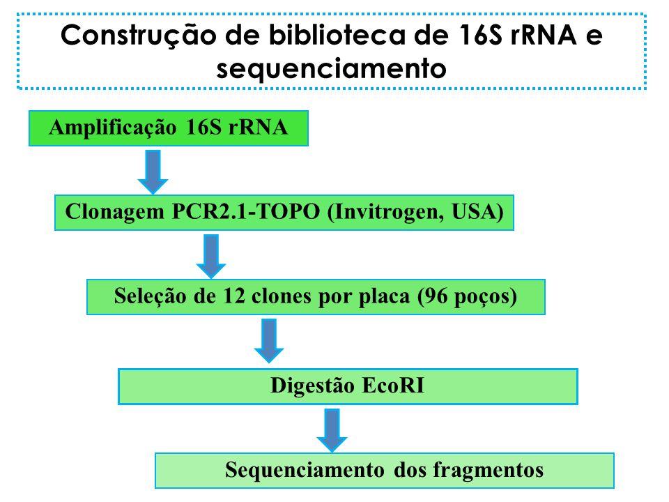 Amplificação 16S rRNA Clonagem PCR2.1-TOPO (Invitrogen, USA) Seleção de 12 clones por placa (96 poços) Digestão EcoRI Sequenciamento dos fragmentos Co