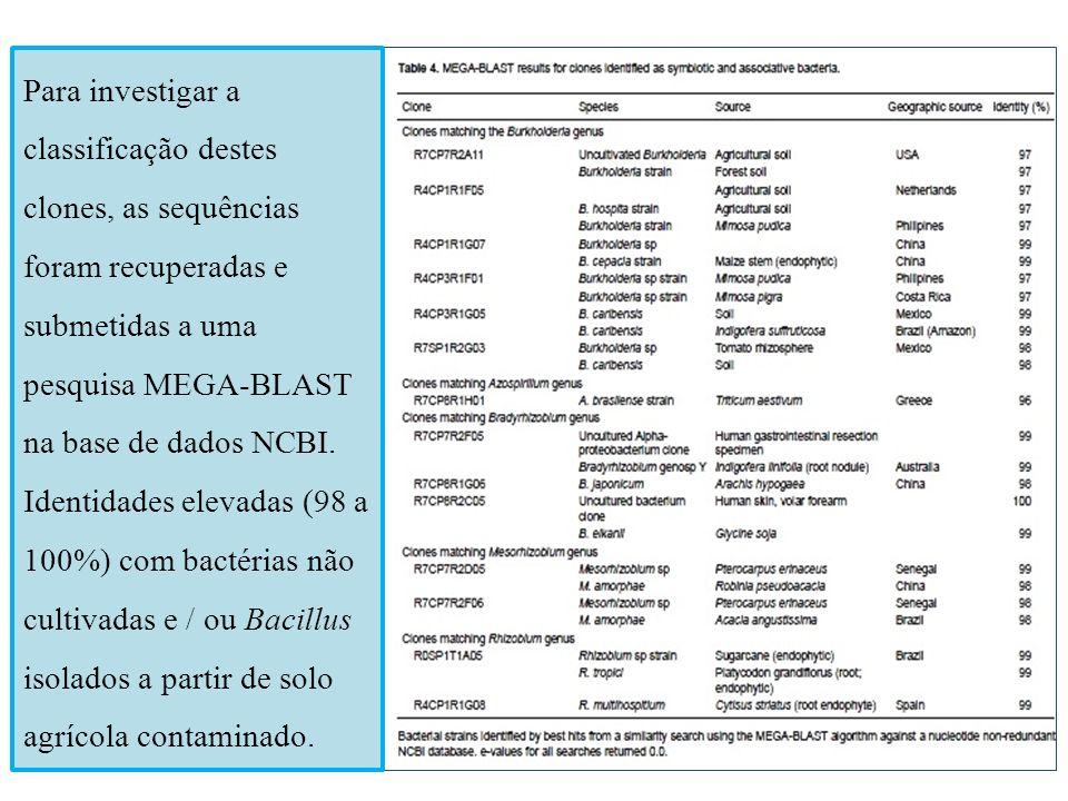 Para investigar a classificação destes clones, as sequências foram recuperadas e submetidas a uma pesquisa MEGA-BLAST na base de dados NCBI. Identidad