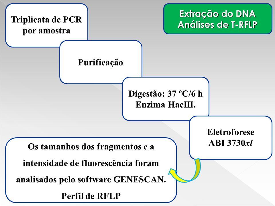 Extração do DNA Análises de T-RFLP Triplicata de PCR por amostra Os tamanhos dos fragmentos e a intensidade de fluorescência foram analisados pelo sof