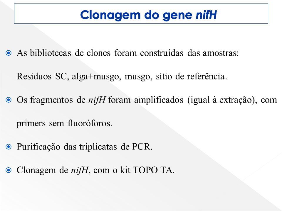 As bibliotecas de clones foram construídas das amostras: Resíduos SC, alga+musgo, musgo, sítio de referência. Os fragmentos de nifH foram amplificados