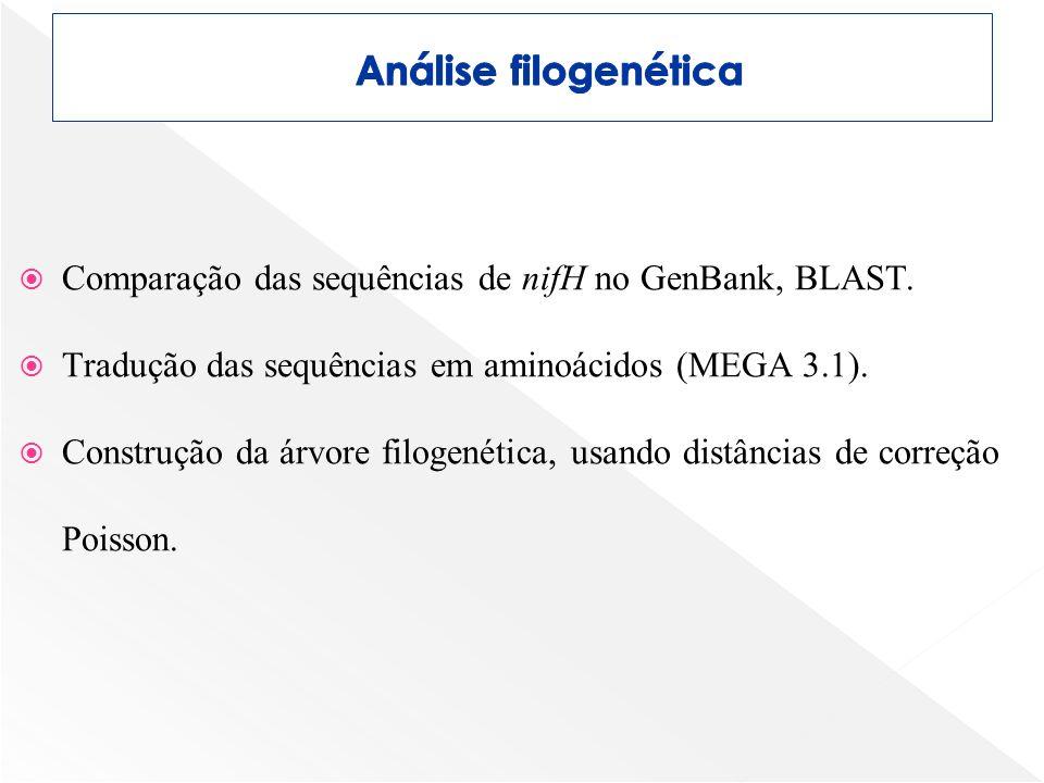 Comparação das sequências de nifH no GenBank, BLAST. Tradução das sequências em aminoácidos (MEGA 3.1). Construção da árvore filogenética, usando dist