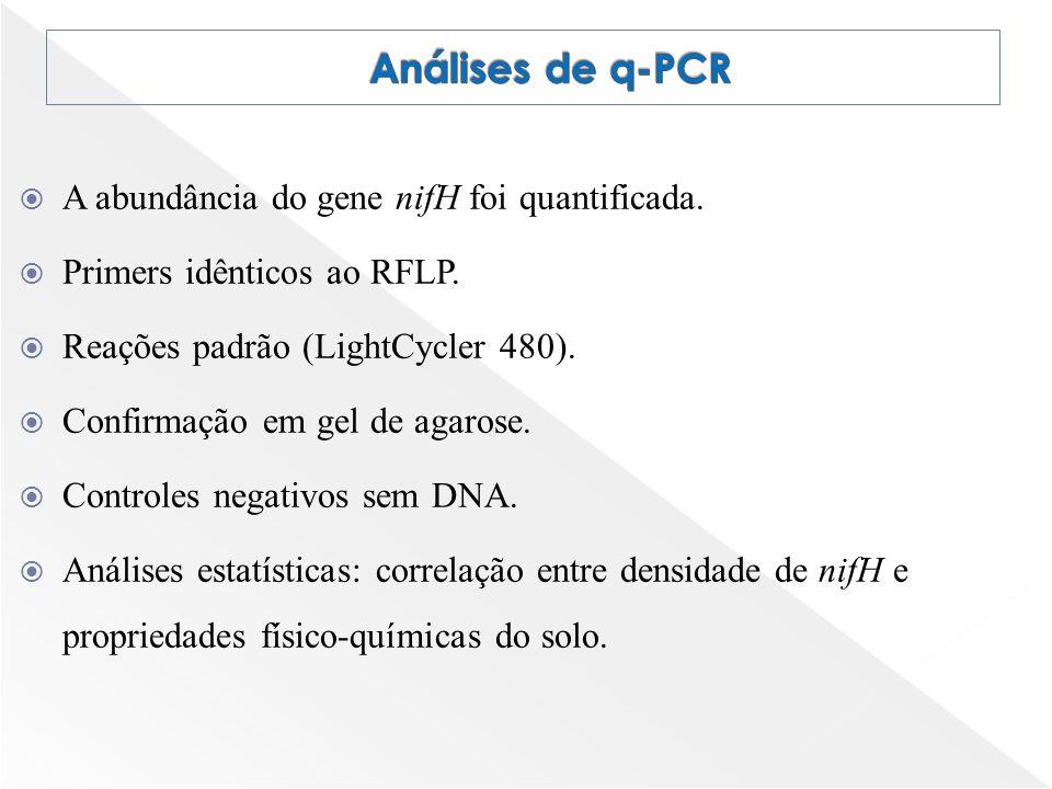 A abundância do gene nifH foi quantificada. Primers idênticos ao RFLP. Reações padrão (LightCycler 480). Confirmação em gel de agarose. Controles nega