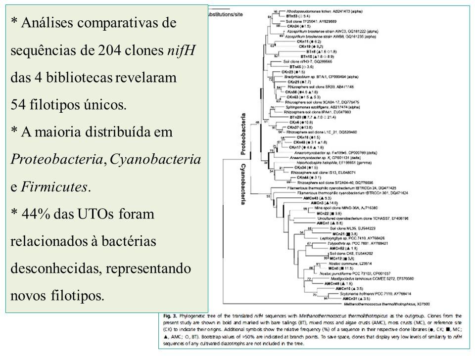 * Análises comparativas de sequências de 204 clones nifH das 4 bibliotecas revelaram 54 filotipos únicos. * A maioria distribuída em Proteobacteria, C
