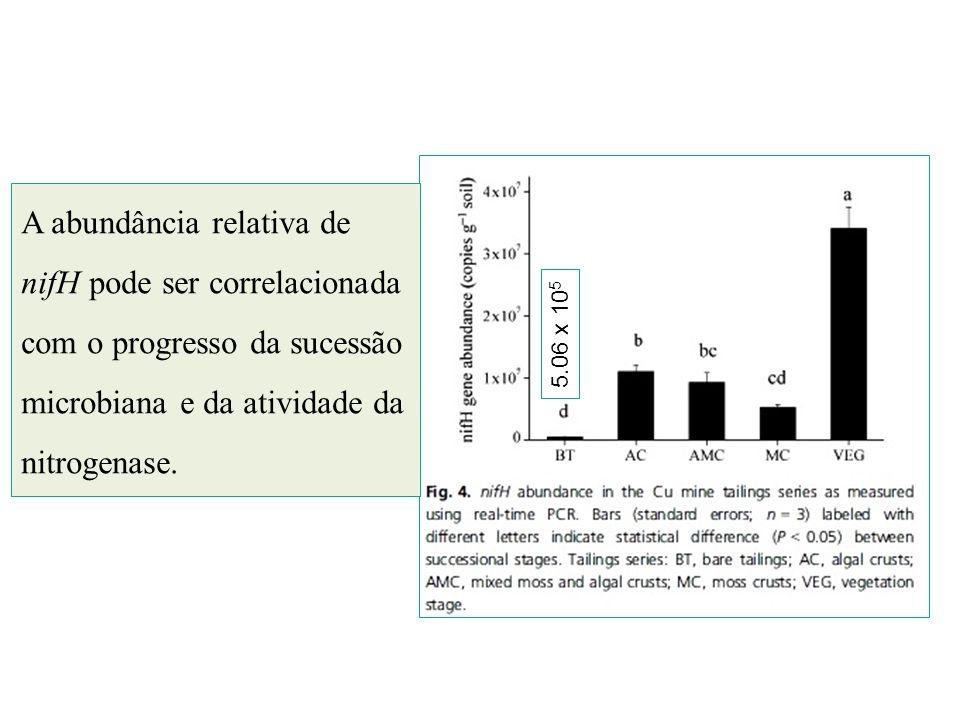 A abundância relativa de nifH pode ser correlacionada com o progresso da sucessão microbiana e da atividade da nitrogenase. 5.06 x 10 5