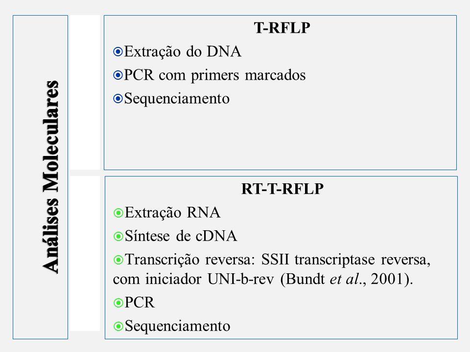 T-RFLP Extração do DNA PCR com primers marcados Sequenciamento RT-T-RFLP Extração RNA Síntese de cDNA Transcrição reversa: SSII transcriptase reversa,