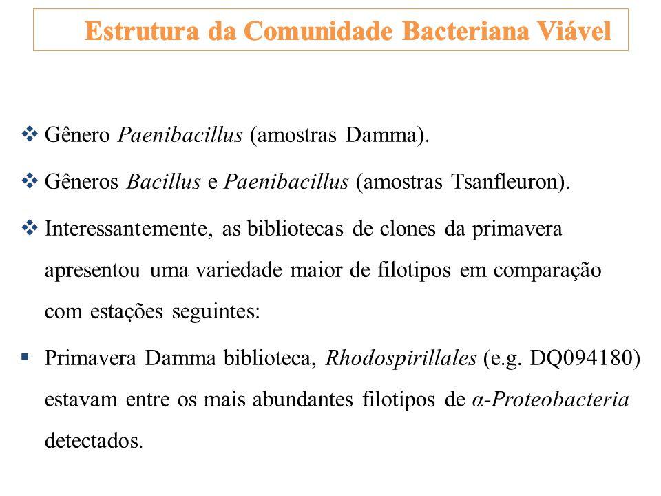 Gênero Paenibacillus (amostras Damma). Gêneros Bacillus e Paenibacillus (amostras Tsanfleuron). Interessantemente, as bibliotecas de clones da primave