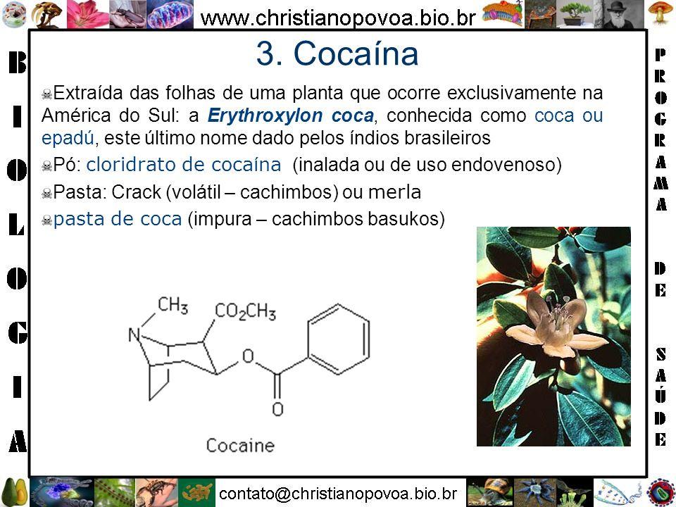 3. Cocaína Extraída das folhas de uma planta que ocorre exclusivamente na América do Sul: a Erythroxylon coca, conhecida como coca ou epadú, este últi