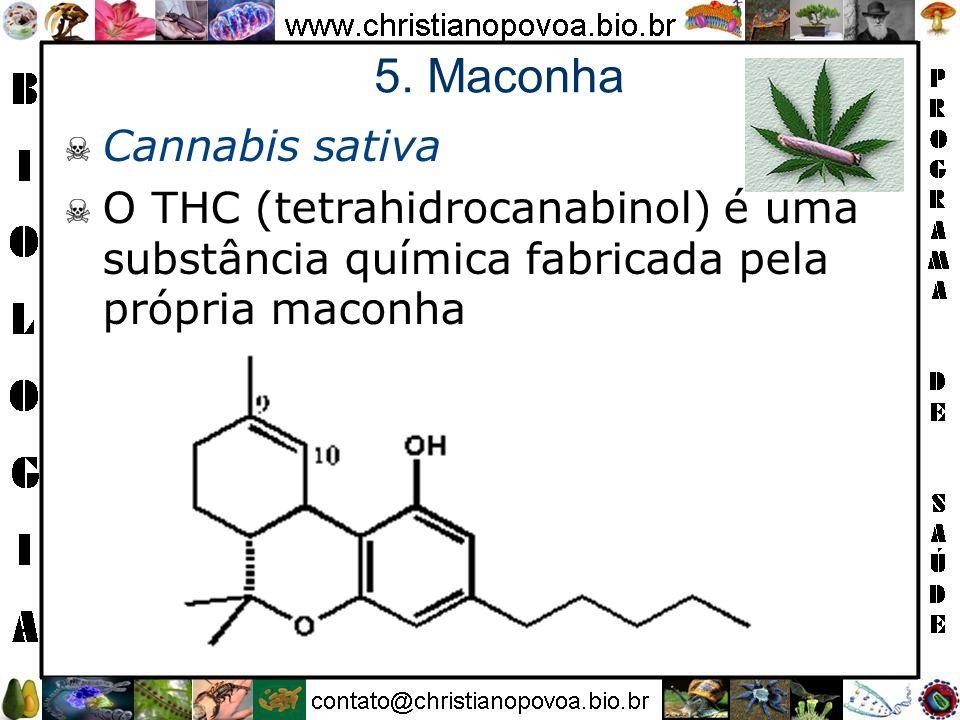5. Maconha Cannabis sativa O THC (tetrahidrocanabinol) é uma substância química fabricada pela própria maconha