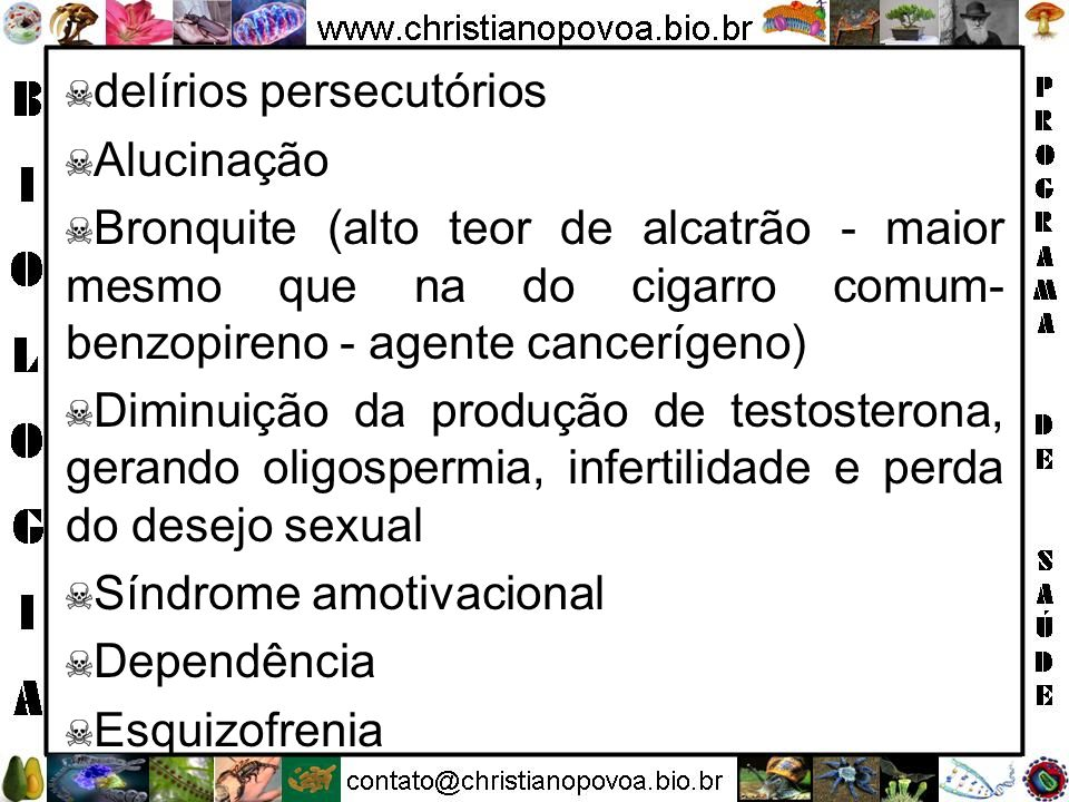 delírios persecutórios Alucinação Bronquite (alto teor de alcatrão - maior mesmo que na do cigarro comum- benzopireno - agente cancerígeno) Diminuição