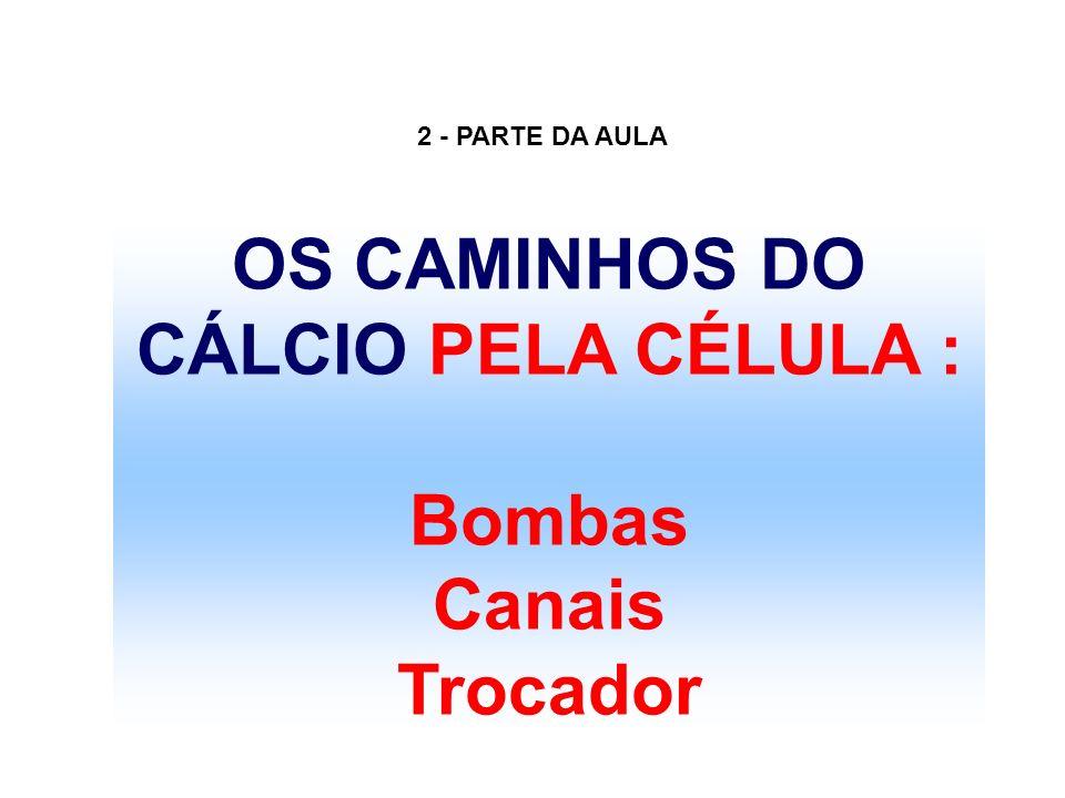 OS CAMINHOS DO CÁLCIO PELA CÉLULA : Bombas Canais Trocador 2 - PARTE DA AULA