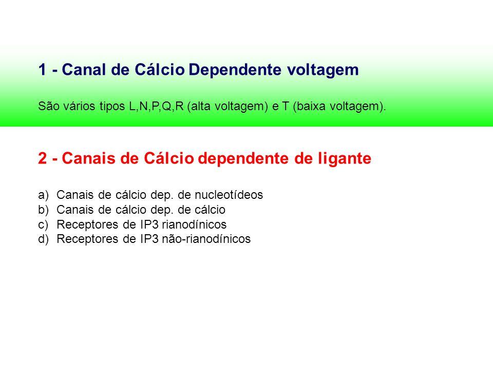 1 - Canal de Cálcio Dependente voltagem São vários tipos L,N,P,Q,R (alta voltagem) e T (baixa voltagem). 2 - Canais de Cálcio dependente de ligante a)