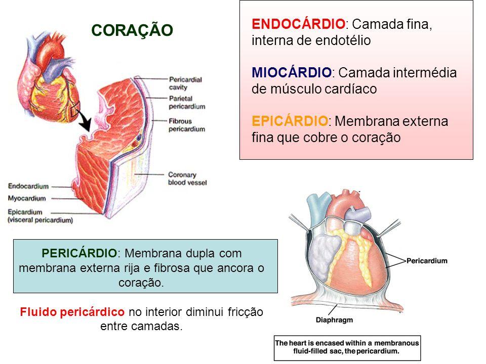 ENDOCÁRDIO: Camada fina, interna de endotélio MIOCÁRDIO: Camada intermédia de músculo cardíaco EPICÁRDIO: Membrana externa fina que cobre o coração PE