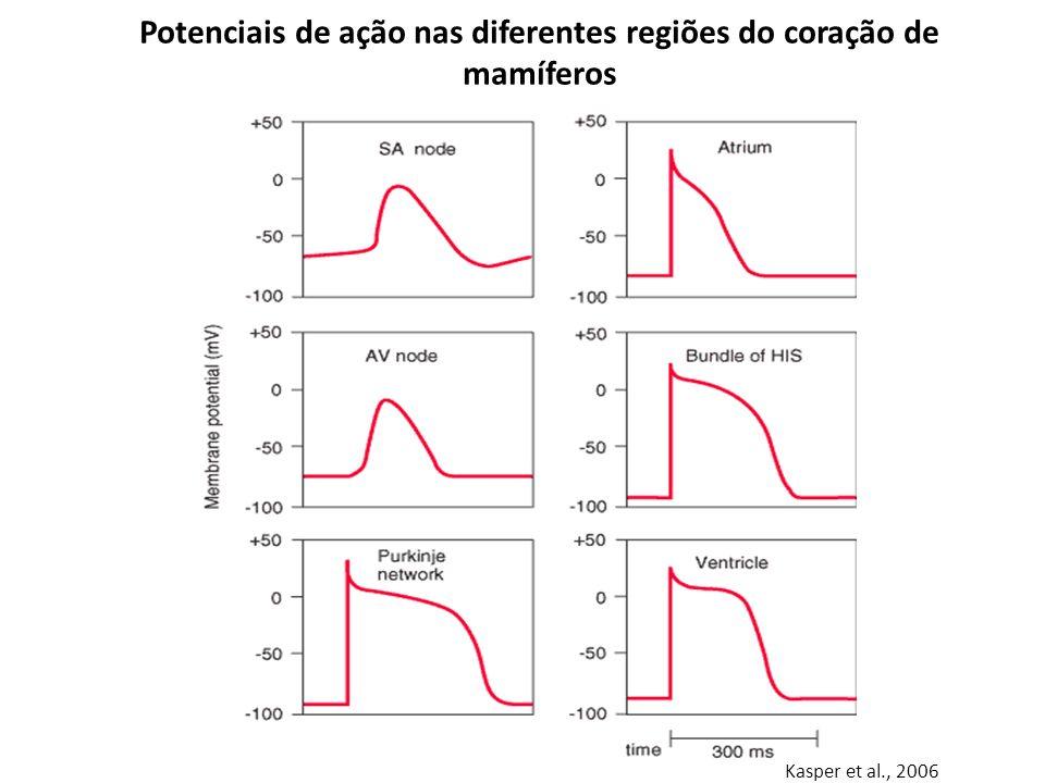 Potenciais de ação nas diferentes regiões do coração de mamíferos Kasper et al., 2006