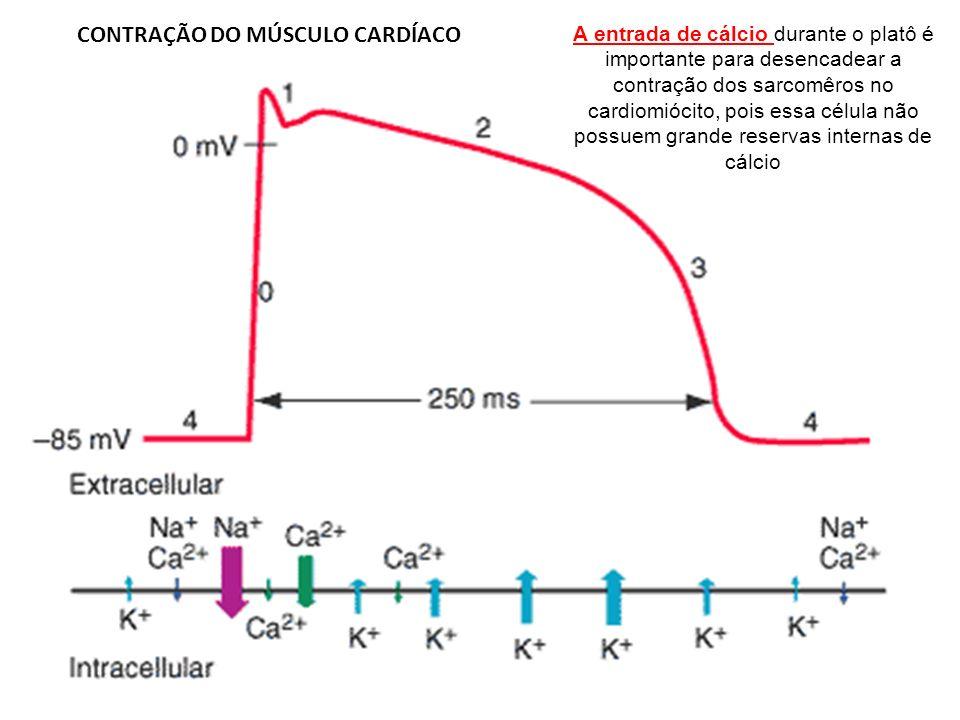 A entrada de cálcio durante o platô é importante para desencadear a contração dos sarcomêros no cardiomiócito, pois essa célula não possuem grande res