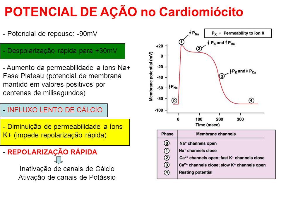 - Potencial de repouso: -90mV - Despolarização rápida para +30mV - Aumento da permeabilidade a íons Na+ Fase Plateau (potencial de membrana mantido em