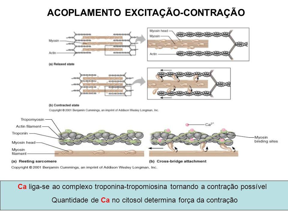 Ca liga-se ao complexo troponina-tropomiosina tornando a contração possível Quantidade de Ca no citosol determina força da contração ACOPLAMENTO EXCIT