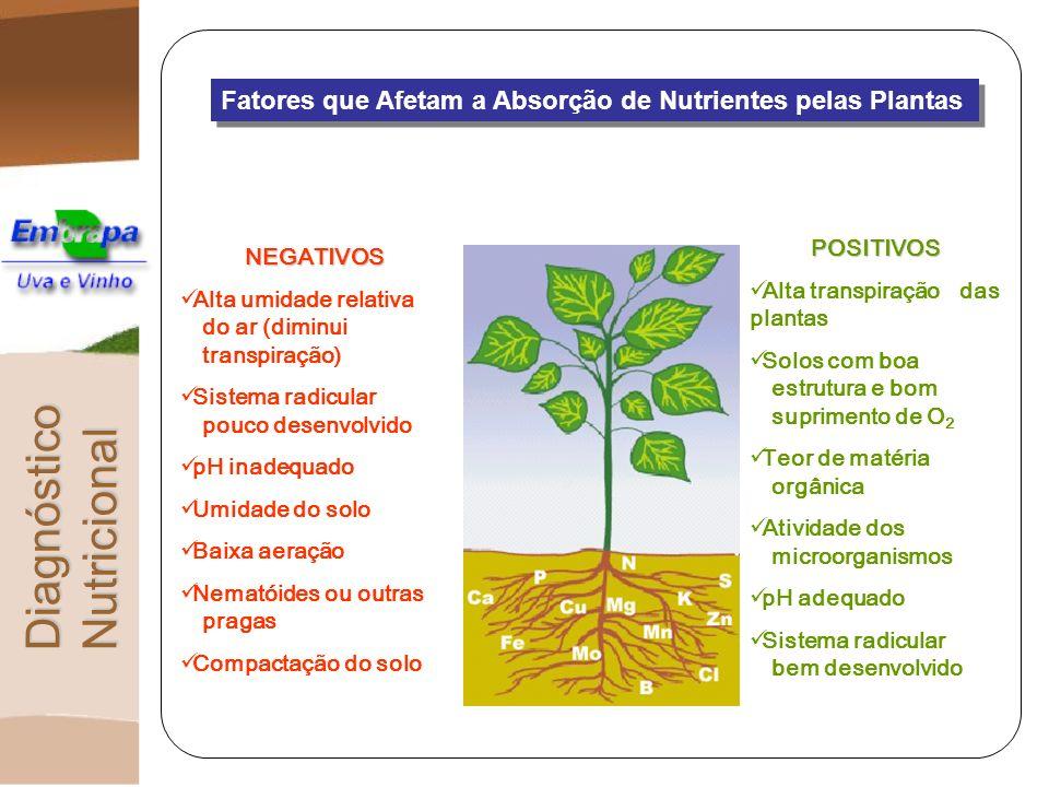 Estado Nutricional Níveis de ocorrência dos nutrientes numa planta e as interações entre eles determinando o crescimento a produtividade e a qualidade da produção.