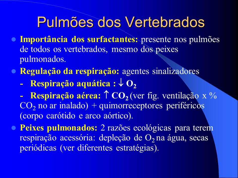 Pulmões dos Vertebrados Importância dos surfactantes: presente nos pulmões de todos os vertebrados, mesmo dos peixes pulmonados. Regulação da respiraç