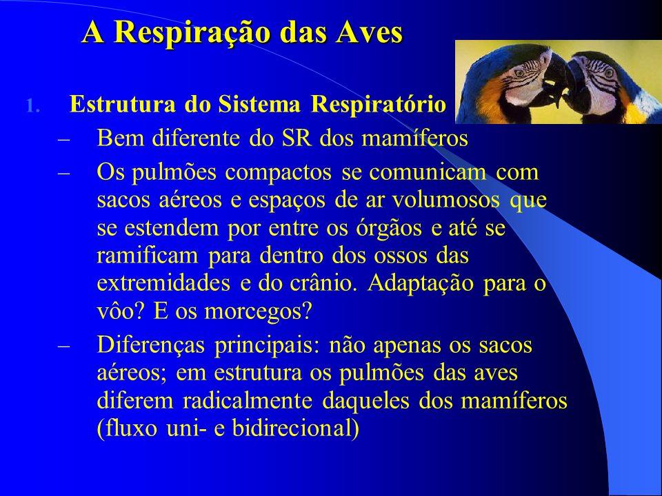 A Respiração das Aves 1. Estrutura do Sistema Respiratório – Bem diferente do SR dos mamíferos – Os pulmões compactos se comunicam com sacos aéreos e