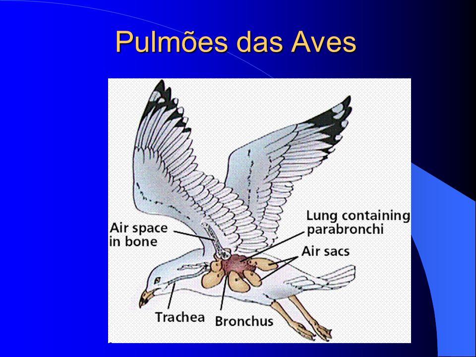 Pulmões das Aves