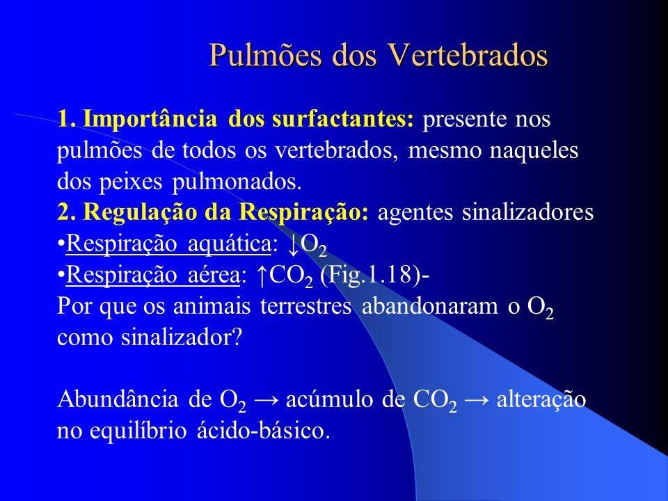 Pulmões dos Vertebrados 1. Importância dos surfactantes: presente nos pulmões de todos os vertebrados, mesmo naqueles dos peixes pulmonados. 2. Regula