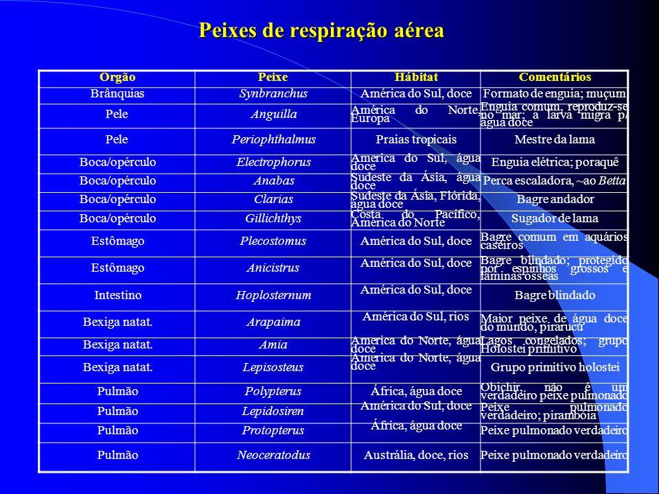 Peixes de respiração aérea ÓrgãoPeixeHábitatComentários BrânquiasSynbranchusAmérica do Sul, doceFormato de enguia; muçum PeleAnguilla América do Norte