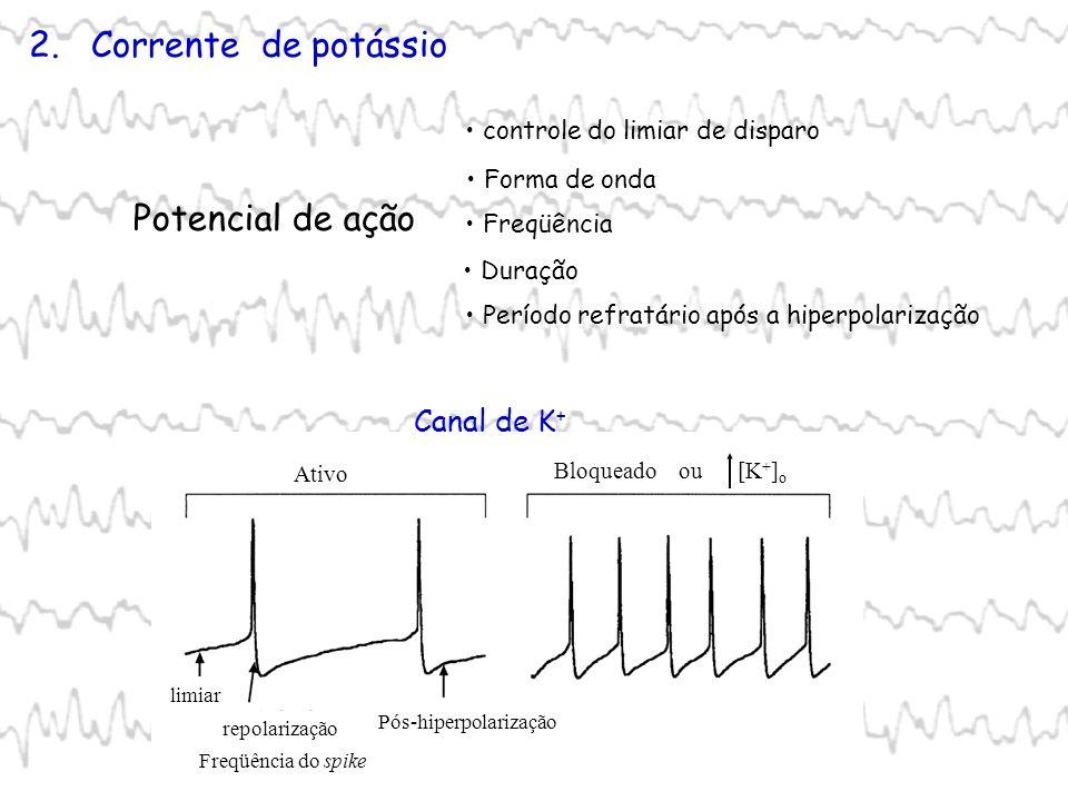 2. Corrente de potássio Potencial de ação Forma de onda Freqüência Duração Período refratário após a hiperpolarização controle do limiar de disparo Ca