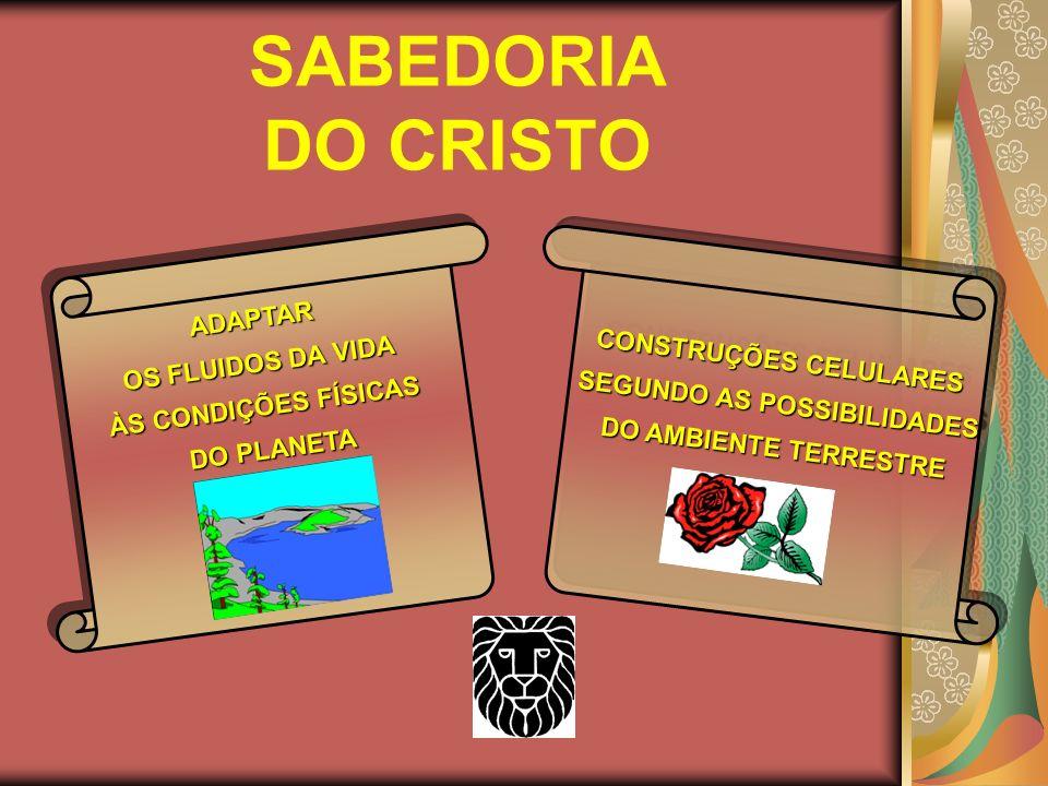SOB A ORIENTAÇÃO MISERICORDIOSA E SÁBIA DO CRISTO SOB A ORIENTAÇÃO MISERICORDIOSA E SÁBIA DO CRISTO
